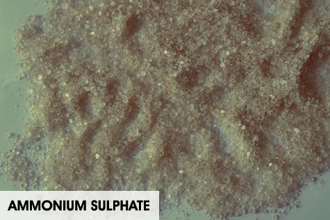 ammonium-sulphate