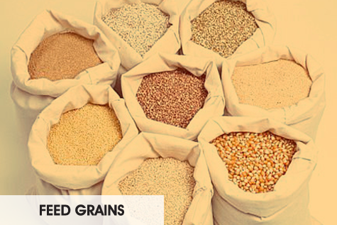 feed grains